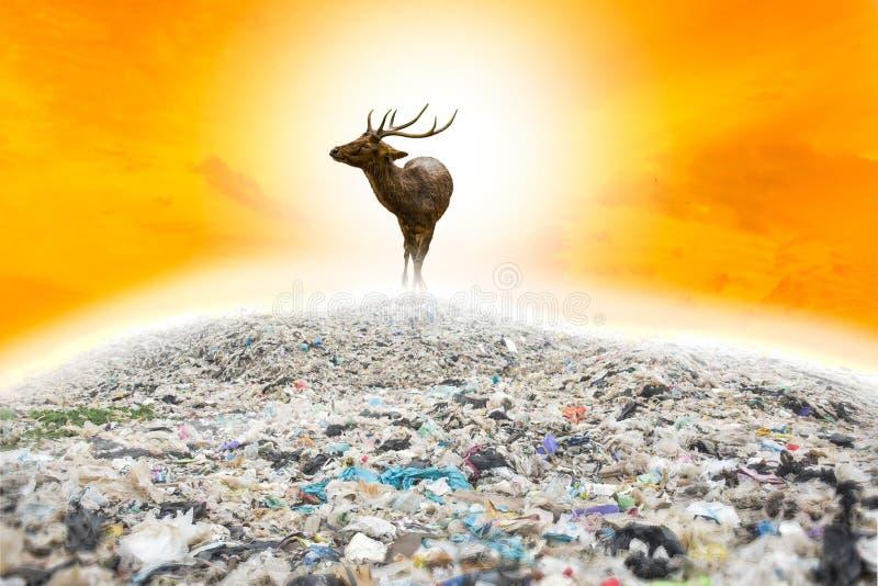 野生生物不存在与动物的绿色世界,并且大树爱世界 库存图片