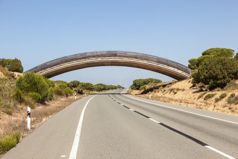 野生生物天桥在Donana国家公园,西班牙 免版税库存图片