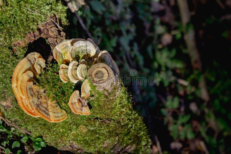 野生生物森林蘑菇的图片在秋天的森林 Spri 免版税图库摄影