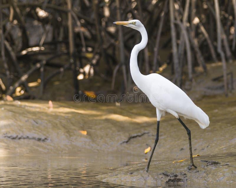 野生生物鸟 免版税库存照片