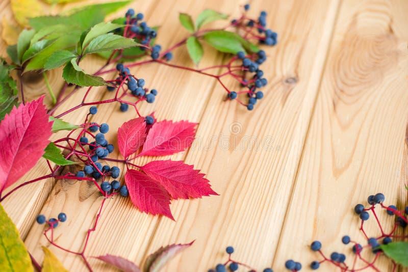野生葡萄莓果特写镜头在木背景的 库存照片