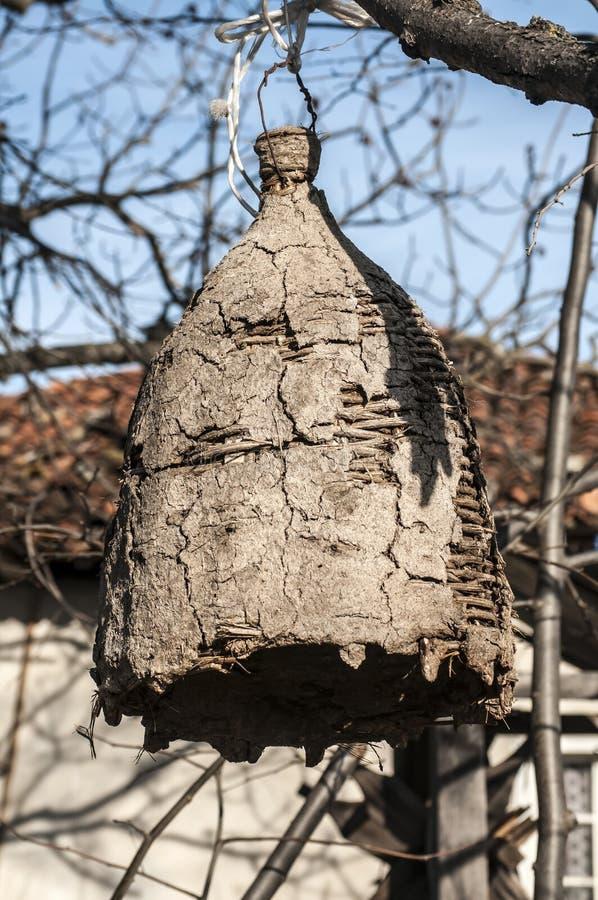 野生蜂的老蜂箱 免版税库存照片