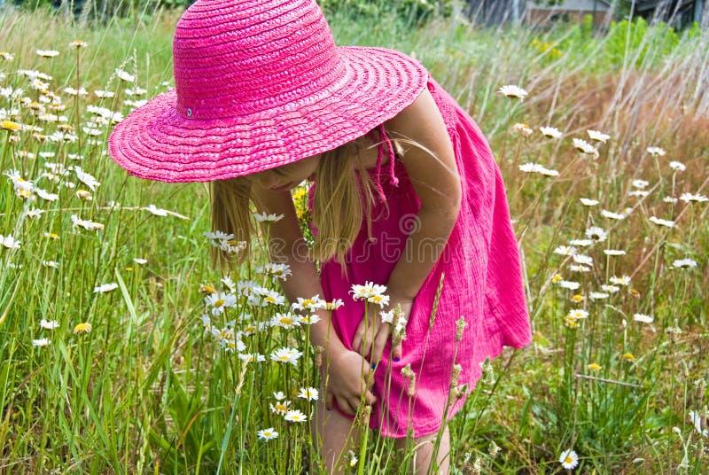 野生雏菊的小女孩 库存图片