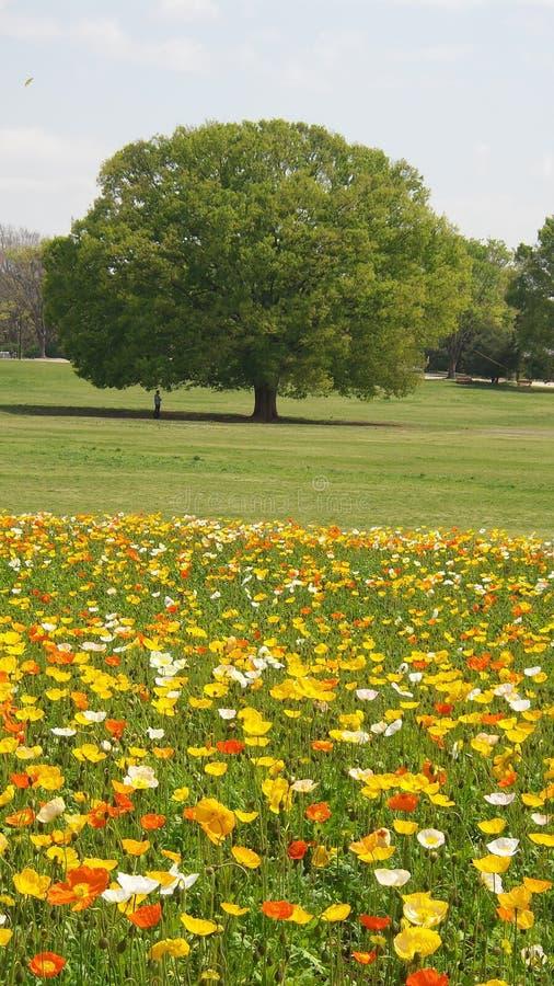 野花为在开放领域的春天生活 免版税库存照片