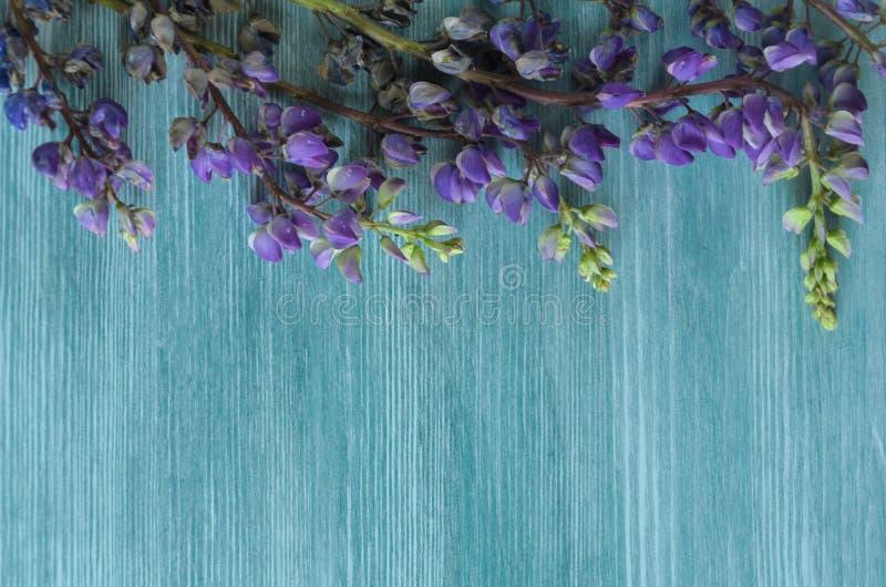 野花关闭与拷贝空间的背景文本的 库存图片