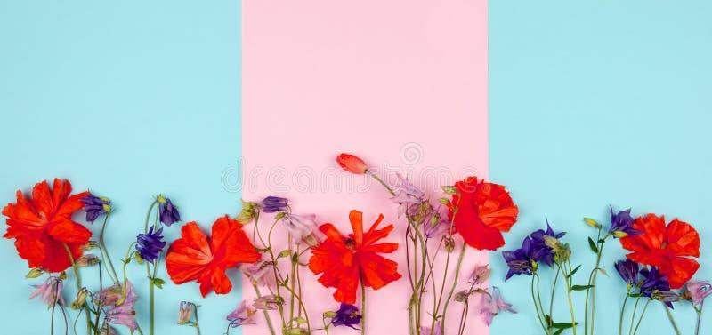 野花和红色鸦片的构成在桃红色蓝色背景特写镜头 库存照片