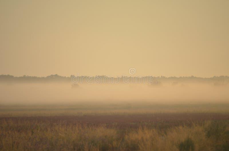 野花和草本的领域在早晨雾被覆盖 免版税库存照片
