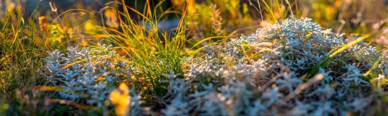 野花和草特写镜头,水平的全景照片 免版税库存照片