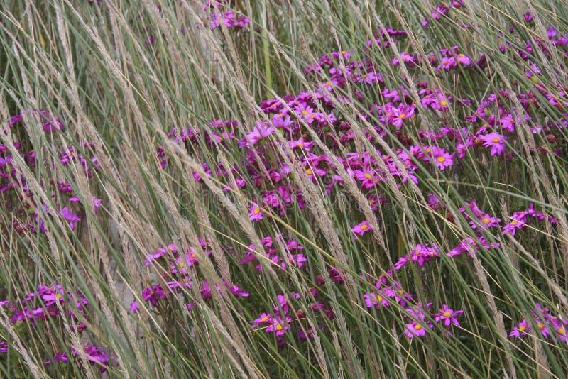 野花和被风吹草 库存照片