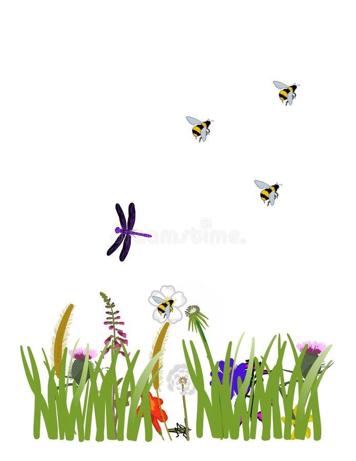 野花和蜻蜓 库存照片