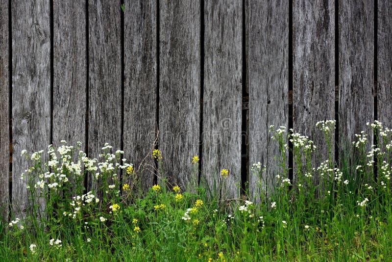 野花和Barnwood 库存图片