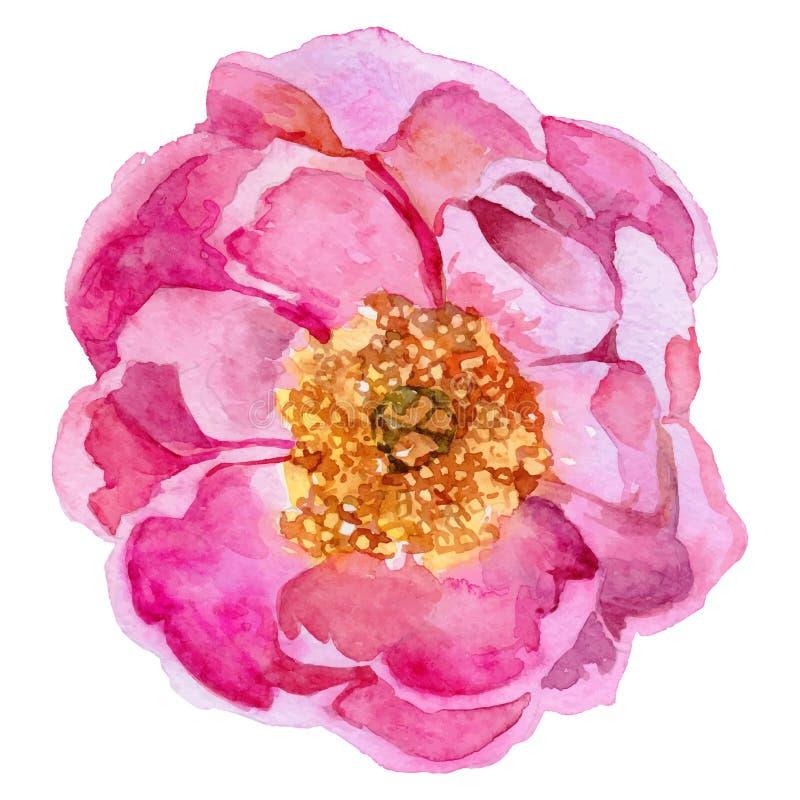 野花在传染媒介样式的牡丹花被隔绝的 库存例证