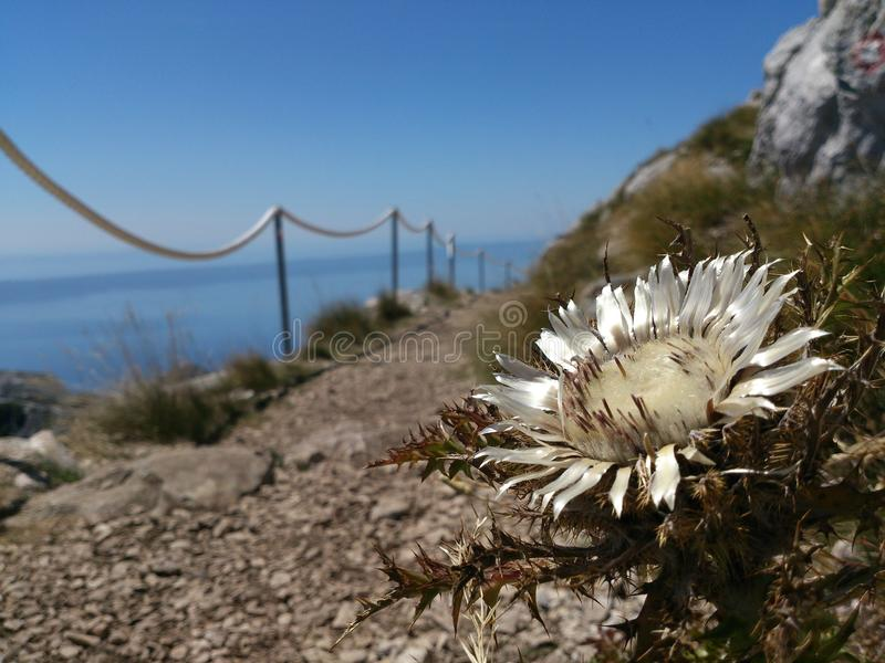 野花在克罗地亚 免版税库存图片