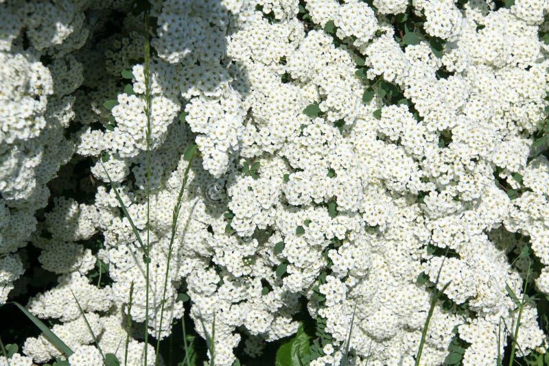 野花在庭院里和在狂放 免版税库存图片