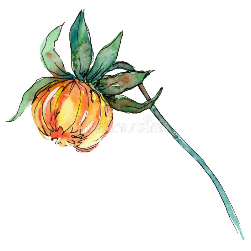 野花在水彩样式的chrysantemum花被隔绝的 库存例证