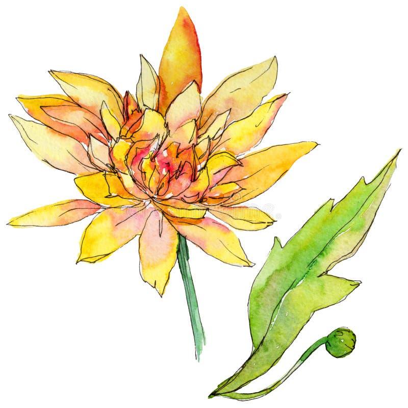 野花在水彩样式的chrysantemum花被隔绝的 向量例证