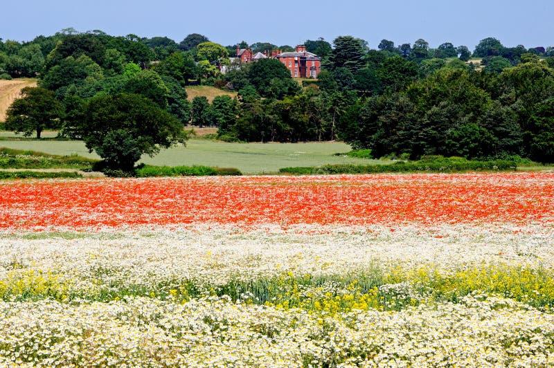 野花在草甸 免版税库存图片