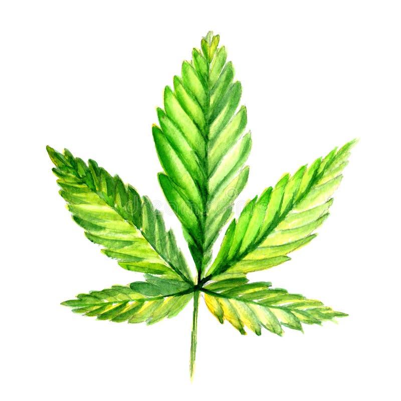 野花在水彩样式的大麻花被隔绝的 库存例证