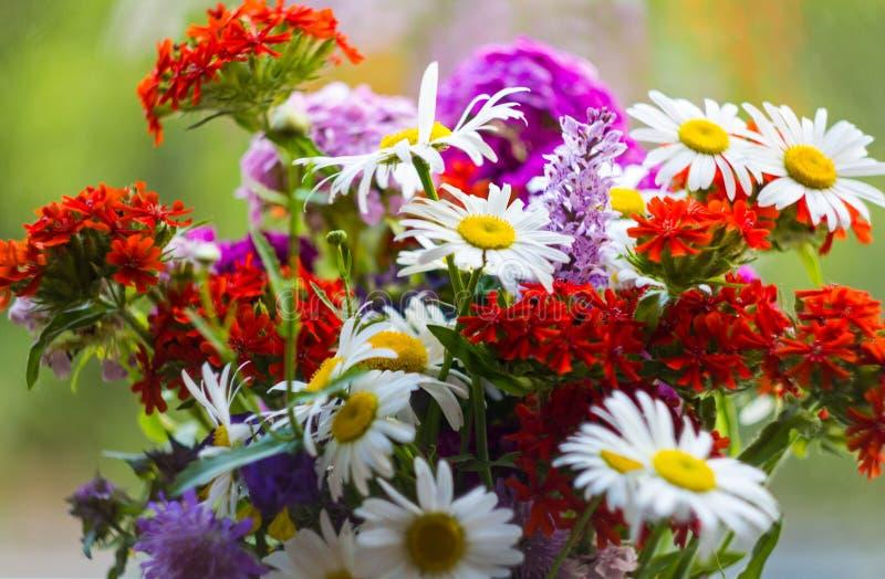 野花明亮的花束与戴西和红色剪秋罗的在绿色背景 ?? 在的红色马耳他十字形 图库摄影
