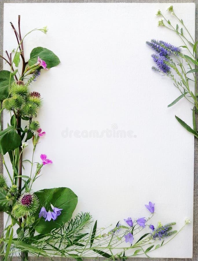 野花框架,响铃,康乃馨,淡紫色,毛刺,在白色帆布背景 r 库存图片