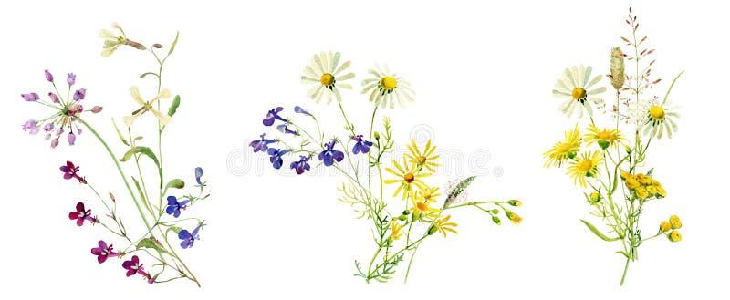 野花水彩多彩多姿的花束  皇族释放例证