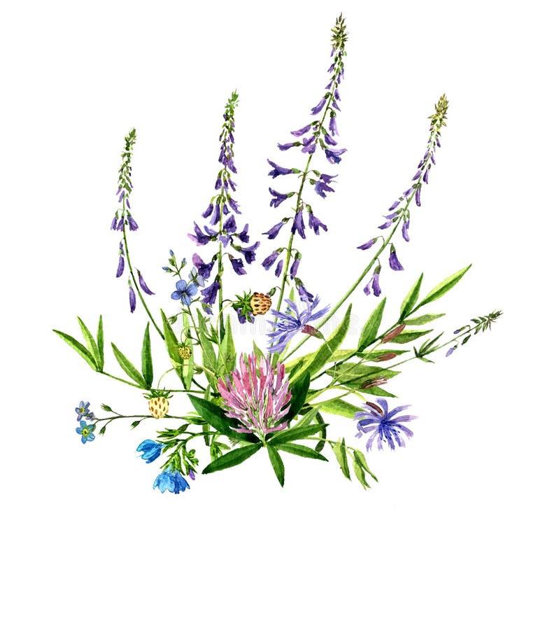 画野花的水彩 皇族释放例证