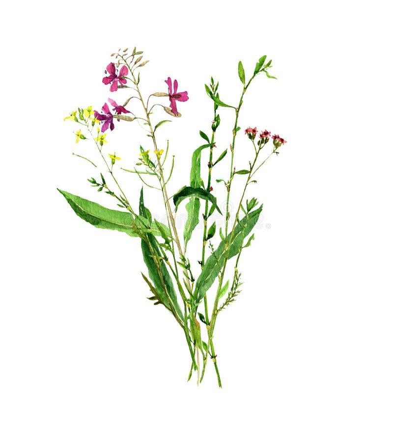 画野花的水彩 库存例证