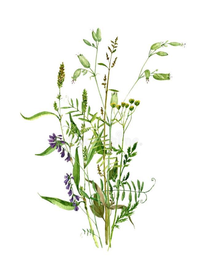 画野花的水彩 向量例证