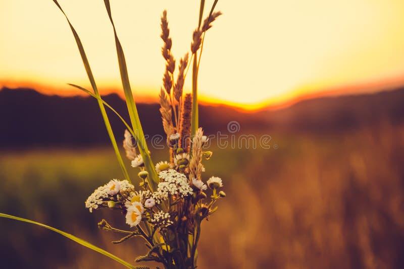 野花花束在日落的在领域 库存图片