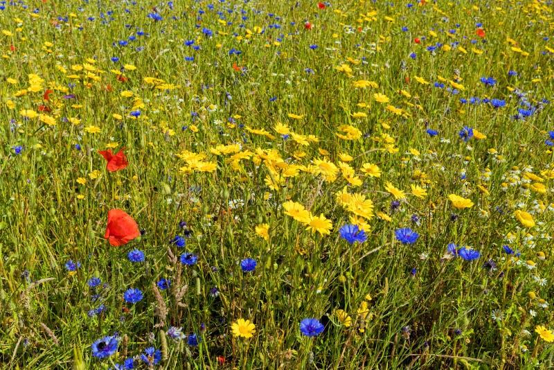 野花草甸,渥斯特夏,英国 免版税库存图片