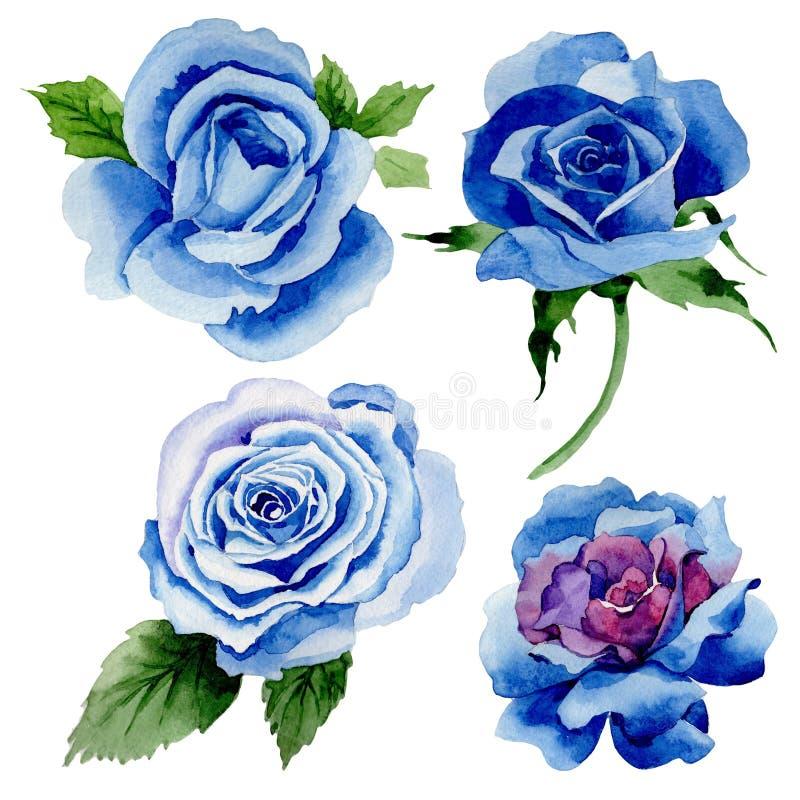 野花蓝色在水彩样式的玫瑰花被隔绝的 向量例证