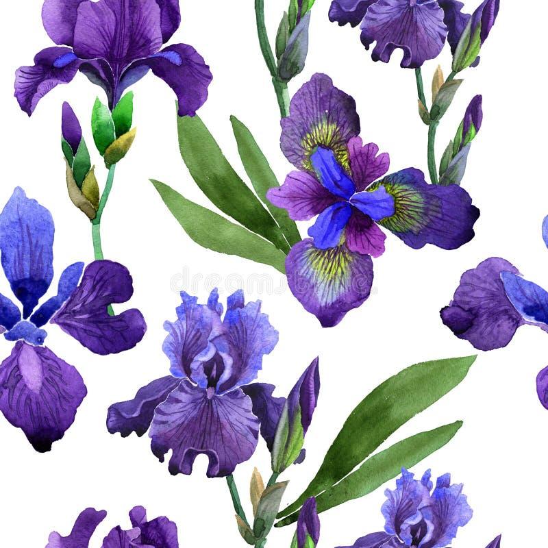 野花虹膜在水彩样式的花纹花样被隔绝的 向量例证