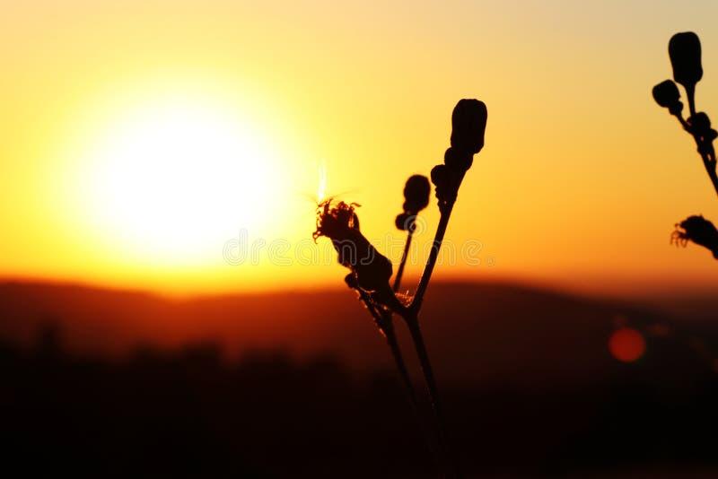 野花词根与惊人的日落的 太阳上面山 非常对红色天空的纯净桔子更多爱情戏的 库存图片