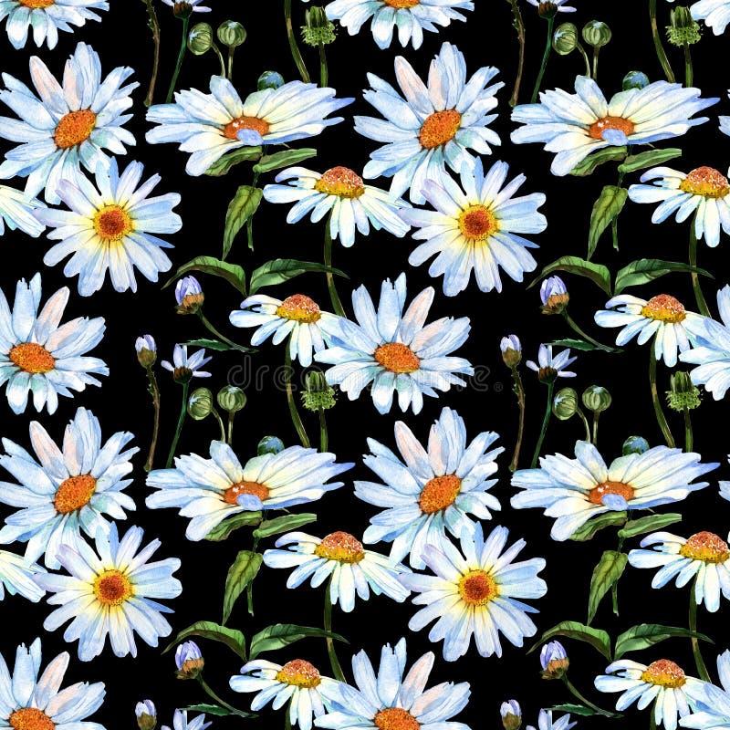 野花雏菊在水彩样式的花纹花样 免版税库存照片