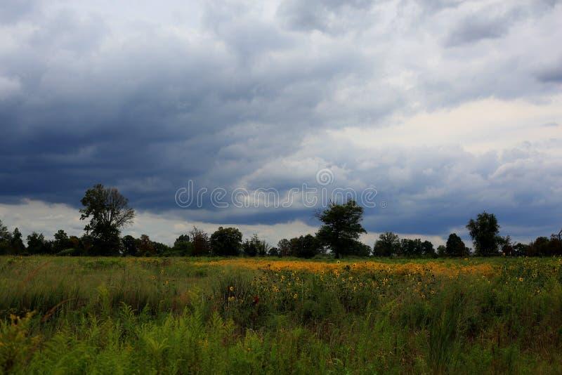 野花领域在一多云天 库存图片