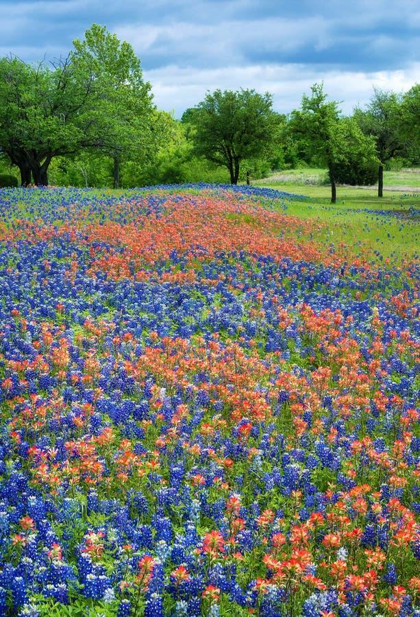 野花领域在得克萨斯春天 图库摄影