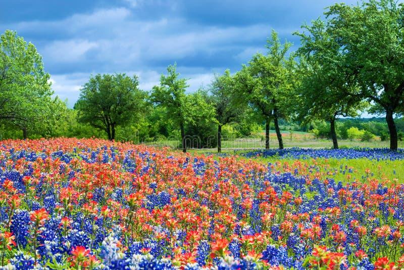 野花领域在得克萨斯春天 免版税库存图片