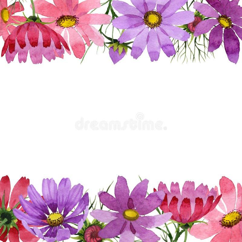 野花kosmeya在水彩样式的花框架被隔绝的 免版税库存图片