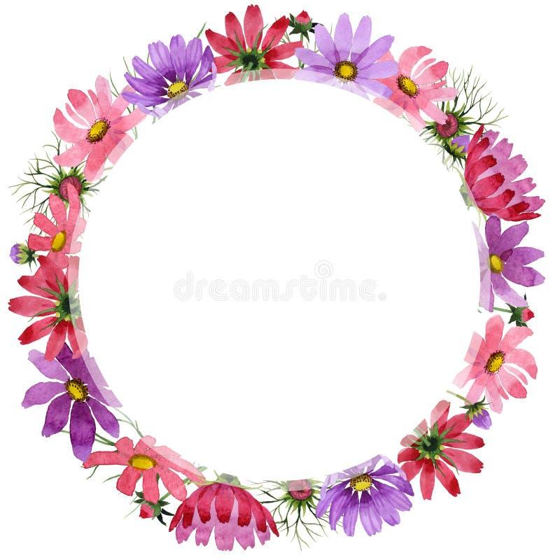 野花kosmeya在水彩样式的花框架被隔绝的 向量例证