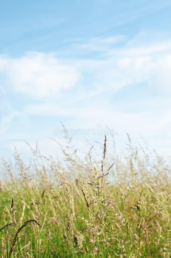 野草夏令时在与白色云彩的蓝天下 免版税图库摄影