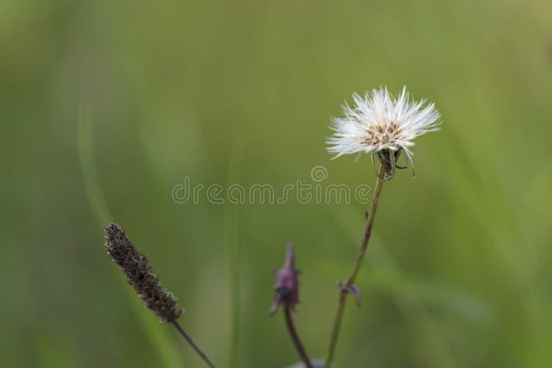 野草种子  免版税图库摄影