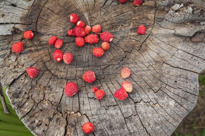 野草莓成熟莓果的顶视图在树桩的 免版税库存图片