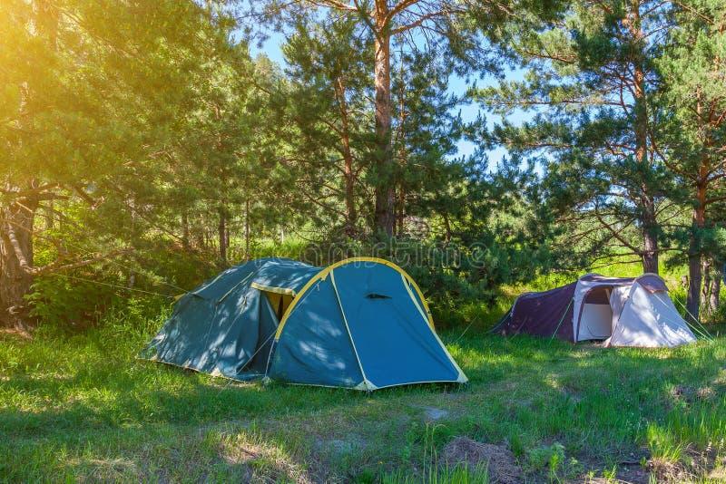 野营在具球果绿色树树荫下的帐篷在一个晴朗的夏日 极限运动和室外休闲没有人 库存照片