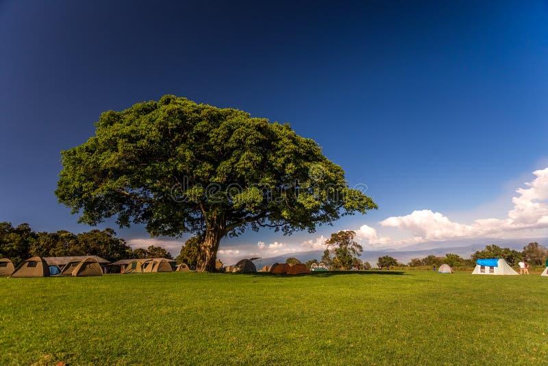 野营在大树下,非洲 免版税图库摄影