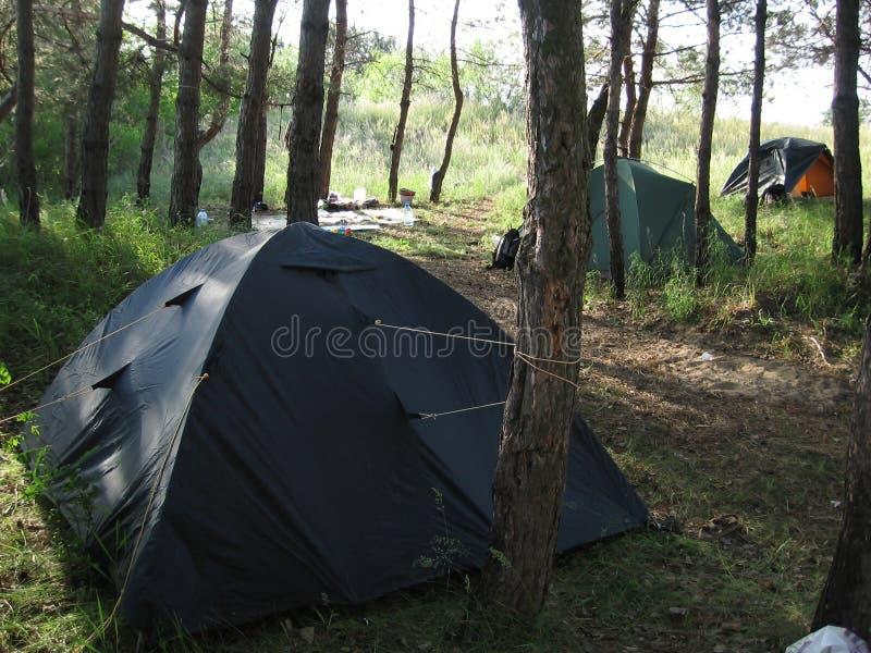 野营的森林 免版税库存图片