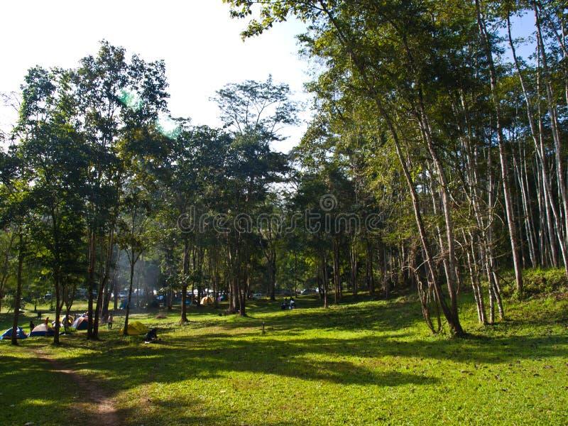 Download 野营的领域在Huay Nam森林粪Naton 库存图片. 图片 包括有 背包, 公园, 冒险家, 峰顶, 旅行 - 30329555