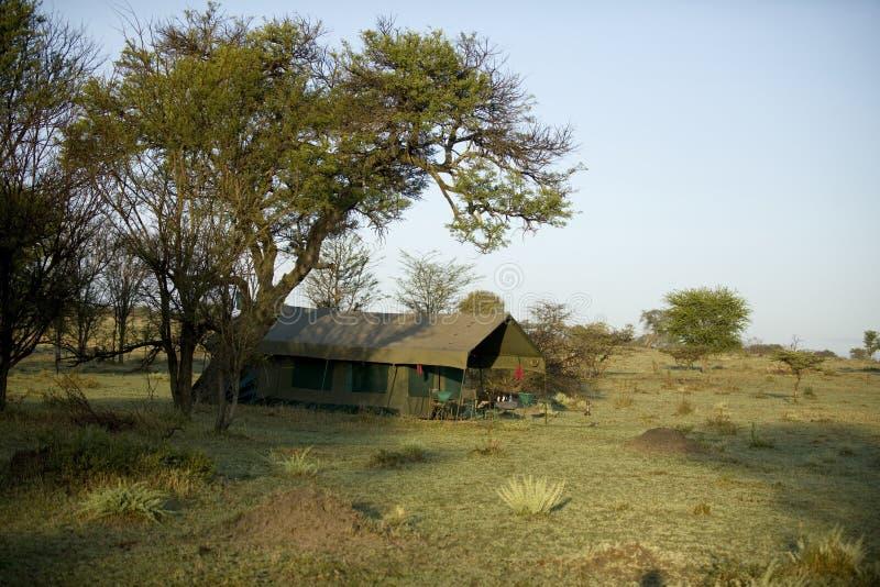 野营的serengeti坦桑尼亚帐篷 免版税图库摄影