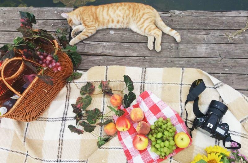 野餐概念篮子用果子和酒,照相机,在湖附近的猫 r 免版税库存照片