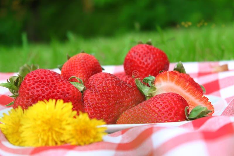 野餐草莓 免版税库存照片