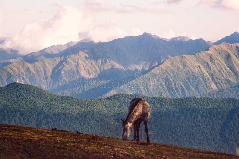 野马和美丽的山在Svaneti,乔治亚环境美化 免版税图库摄影